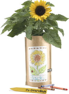 Kids Mini Sunflower Garden in a Bag