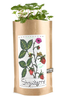 Kids Strawberry Garden in a Bag