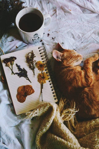 hygge, cats, tea, dried flowers