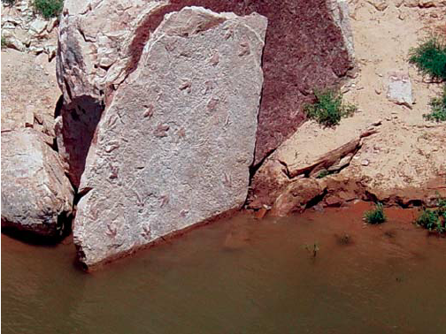 Dinosaur fossils located at Lake Powell in Glen Canyon, Arizona