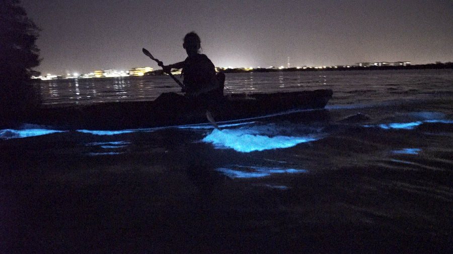 Bioluminescence Creatures of Light kayak tours in Florida