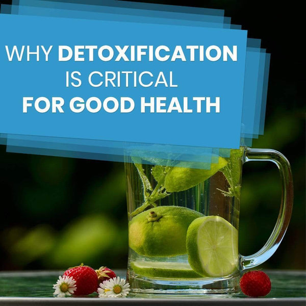Why Detoxification is Critical for Good Health