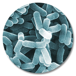 The Probiotic Lie Stop Throwing Money Down The Drain