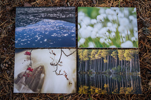 Notecards x 8 – Nature Collection