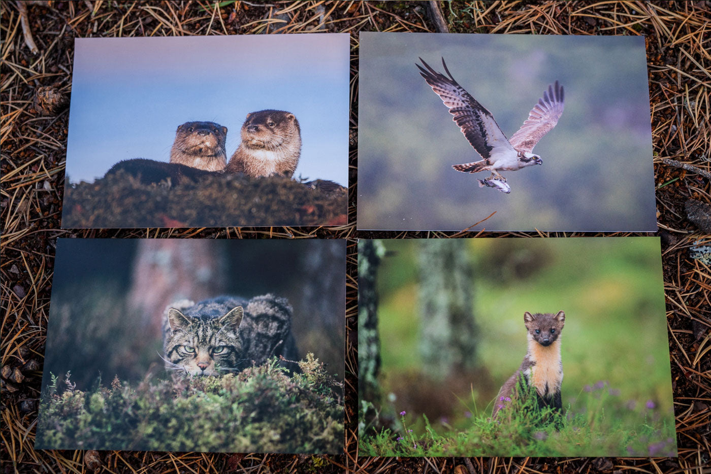 Notecards x 8 – Latest Wildlife Collection