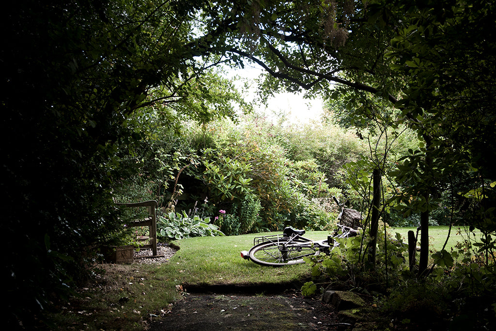Photography of a small sunlit garden by Kat Gollock