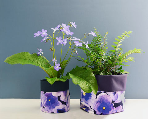 Pansy Plant Pot Small and Large