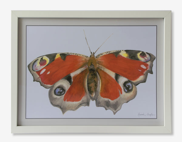 Peacock Butterfly Print