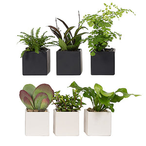Mini Tropical Plants