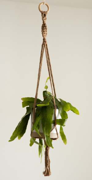 Open image in slideshow, plant holder - macrame - stunning hibiscus