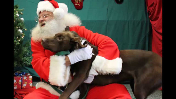Photos With Santa: Are They Right For Your Dog?