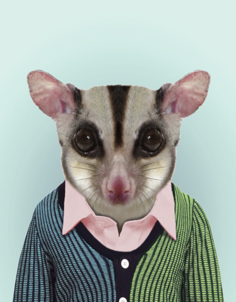 Zoo Portraits: Sugar Glider