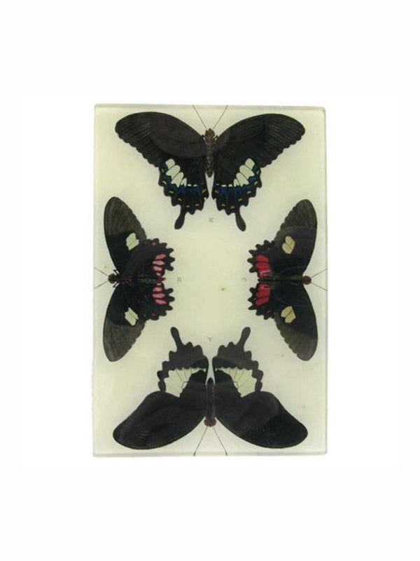 John Deriam 4 Butterflies Plate - 1love2hugs3kisses Ibiza