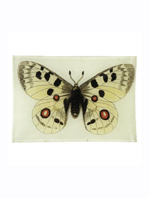 John Deriam Apollo Butterfly Plate - 1love2hugs3kisses Ibiza