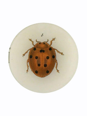 John Deriam Tiny Dot Lady Bug Plate - 1love2hugs3kisses Ibiza