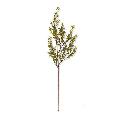 Green Boxwood Spray Stem