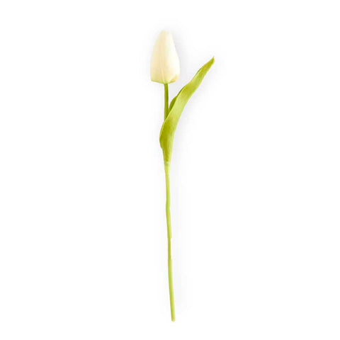 White Mini Tulip