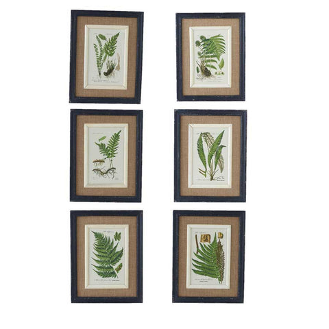 Assorted Fern Prints, Black Frame