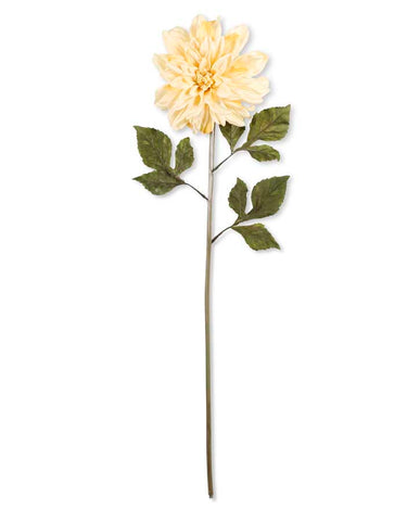 Large Cream Dahlia Stem