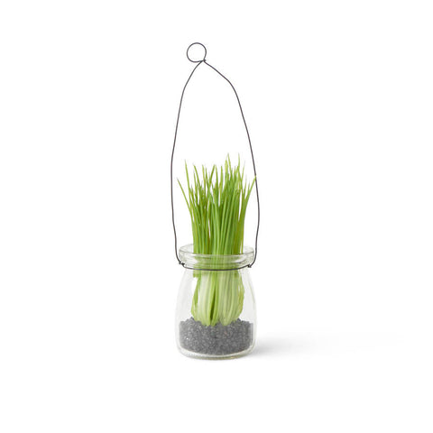 Mini Grass in Glass Bottle