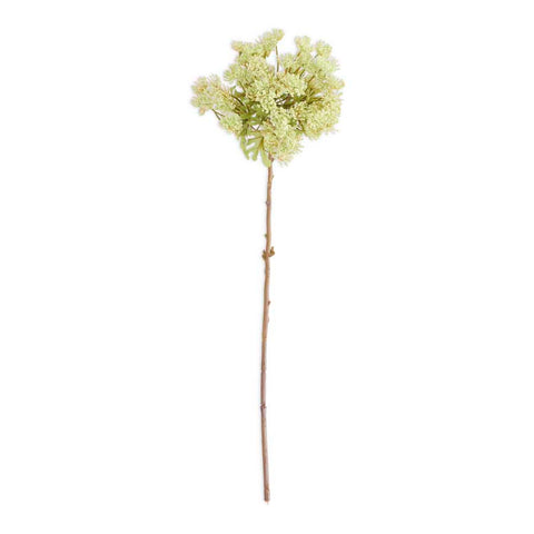 Green Queen Anne's Lace Stem