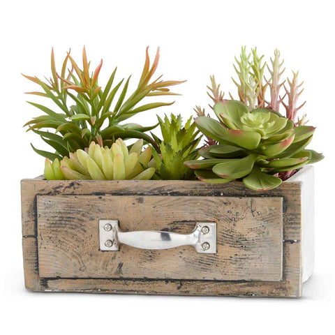 Succulents in Rectangle Wooden Drawer