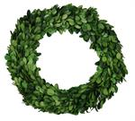 Preserved Boxwood Wreath 11""
