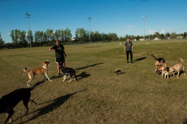 Dog Training through Exercising