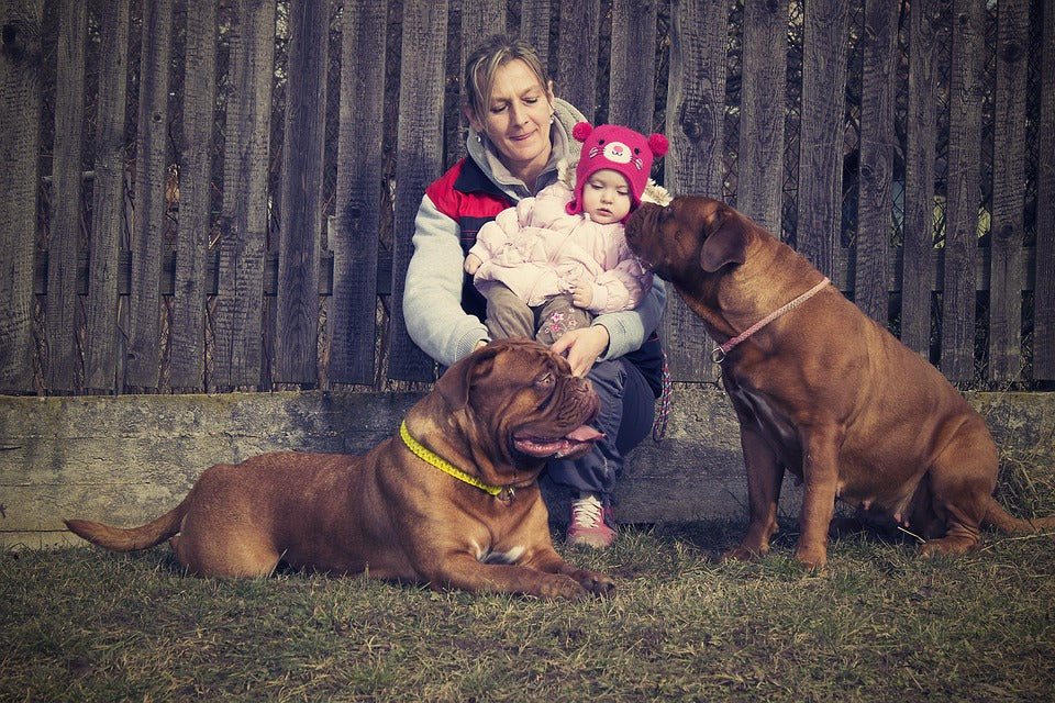 Mastiffs – Fun Facts and Crate Size