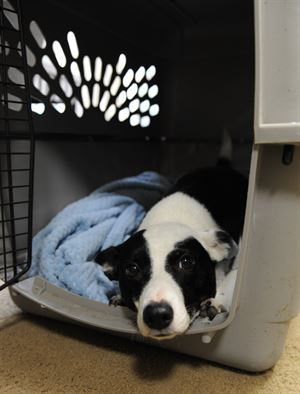 Choosing The Best Pet Crate For Your Vehicle Pet Crates Direct