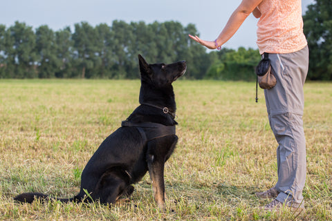Dog Training: Commands your Pup needs to know