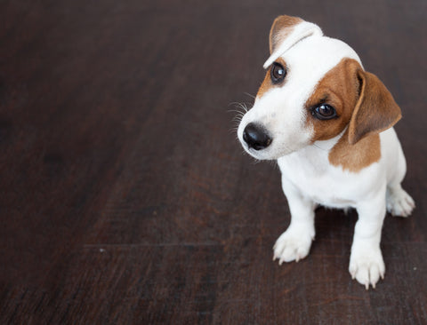 11 Essential Supplies You Need for Your New Puppy