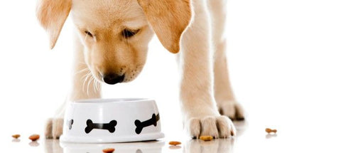 Top 25 Organic Dog Foods