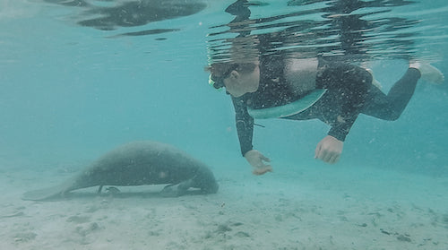 We discovered that swimming with manatees in Florida was something you could do via Trip Advisor.