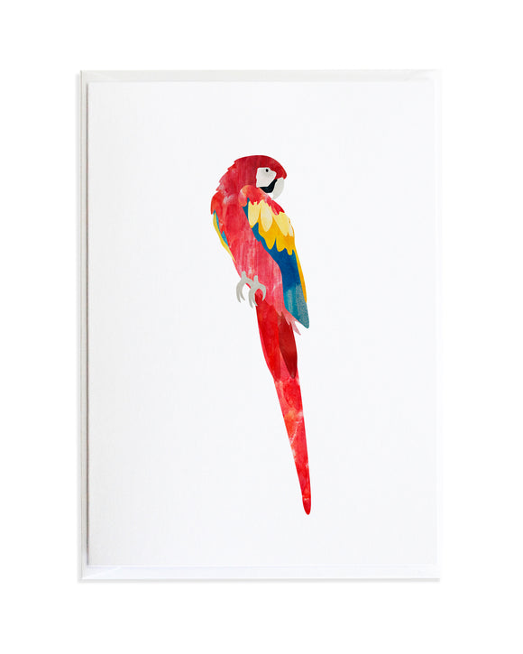 Watercolor Macaw Parrot Bird Greeting Card by Anne Green Design