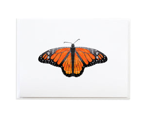 Monarch Butterfly Card