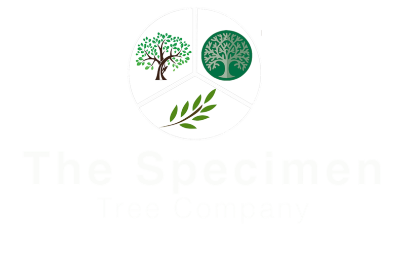 The Specimen Tree Company Catalogue