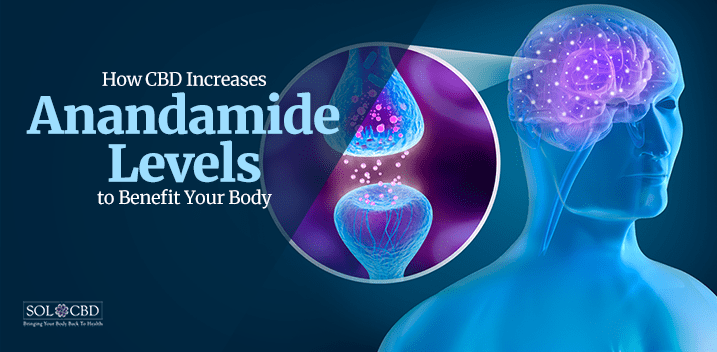 The Incredible Effects Of Anandamide And CBD
