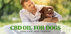 CBD oil for dog seizures