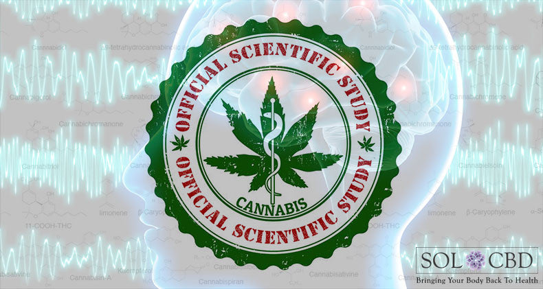 Initial Studies of CBD Oil for Seizures Positive