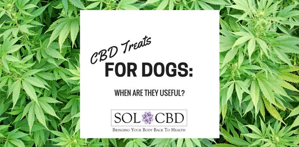 CBD Treats for Dogs: When Are They Useful?