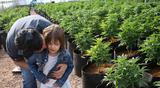 Charlotte's Incredible Story of CBD and Seizures