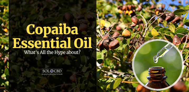The Hype Behind Copaiba Essential Oil