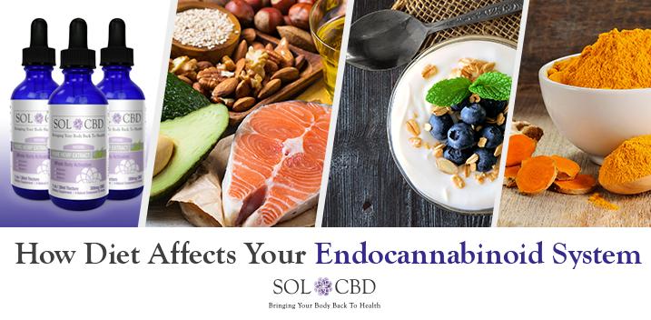 How Diet Affects Your Endocannabinoid System