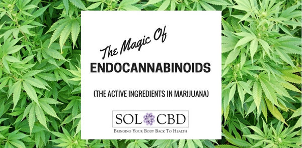 The Magic of Endocannabinoids