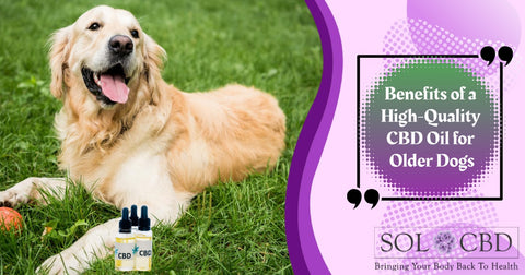 Benefits of A High-Quality CBD Oil for Dogs