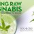 Juicing Raw Cannabis: Everything You Need to Know