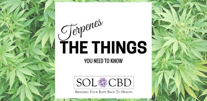 Cannabis Terpenes: The Things You Need to Know