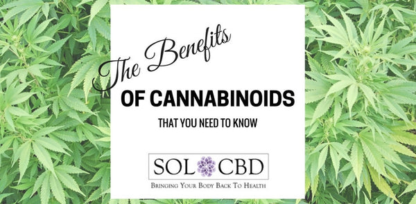 The Benefits of Cannabinoids That You Need to Know