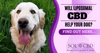 Will Liposomal CBD Help Your Dog? Find Out Here